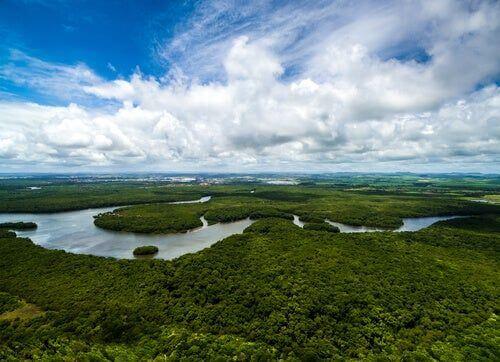 Dorzecze Amazonki