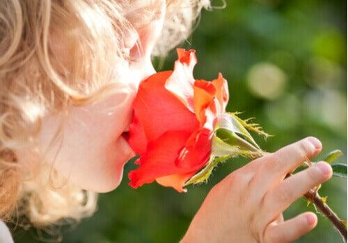Dziecko wąchające różę