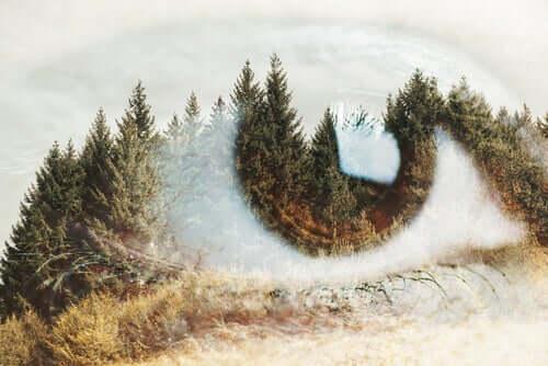 Oko z obrazem lasu