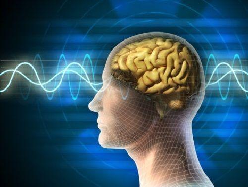 Fale mózgowe
