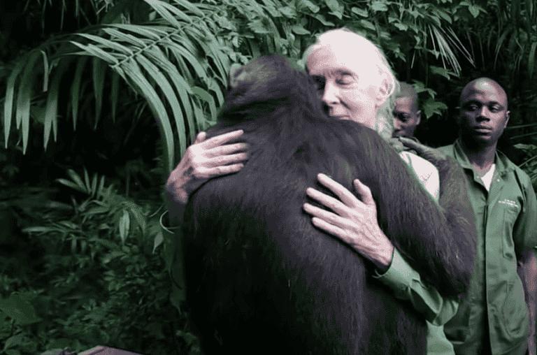 Jane Goodall - od hobby po światowy sukces