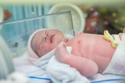 Noworodek w inkubatorze