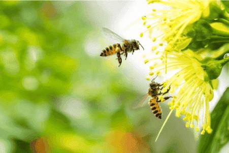 Strach przed pszczołami, czyli apifobia.