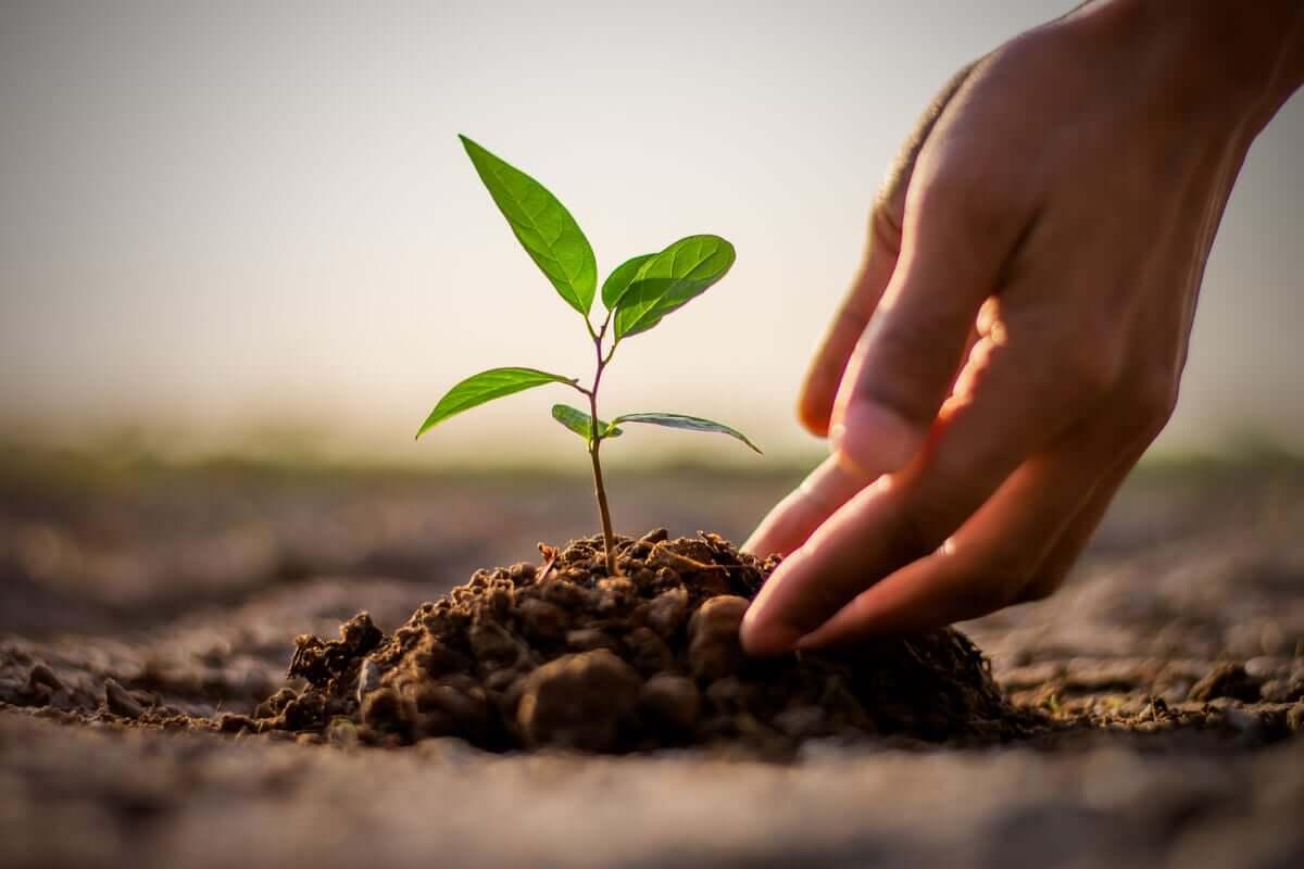 Roślinka w ziemi