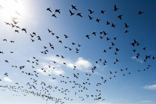 Lęk przed ptakami: jak go pokonać?