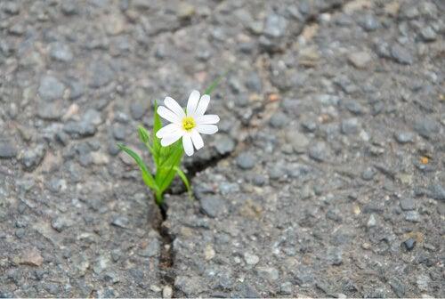 Kwiatek w betonie