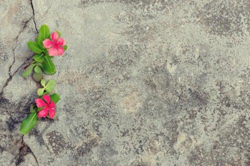 Kwiat na betonie