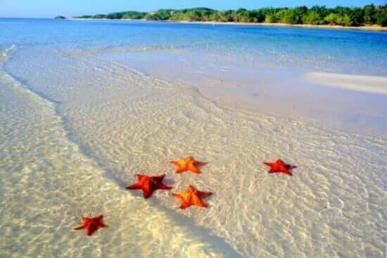 Rozgwiazdy w płytkiej wodzie