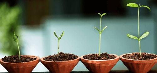 Kiełkujące rośliny symbolizujące psychologię integralną