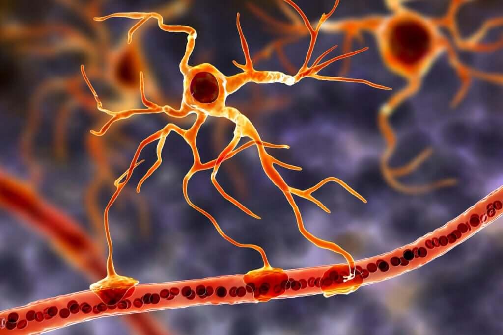 Komórki glejowe: podstawowe jednostki funkcjonalne mózgu