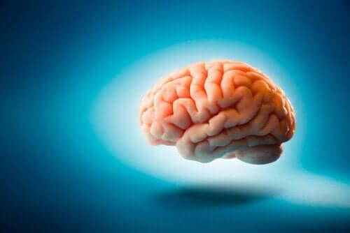 Ciekawostki dotyczące mózgu: 6 zaskakujących faktów