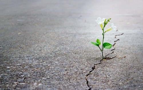 Kwiat wyrastający ze szczeliny w betonowej ulicy