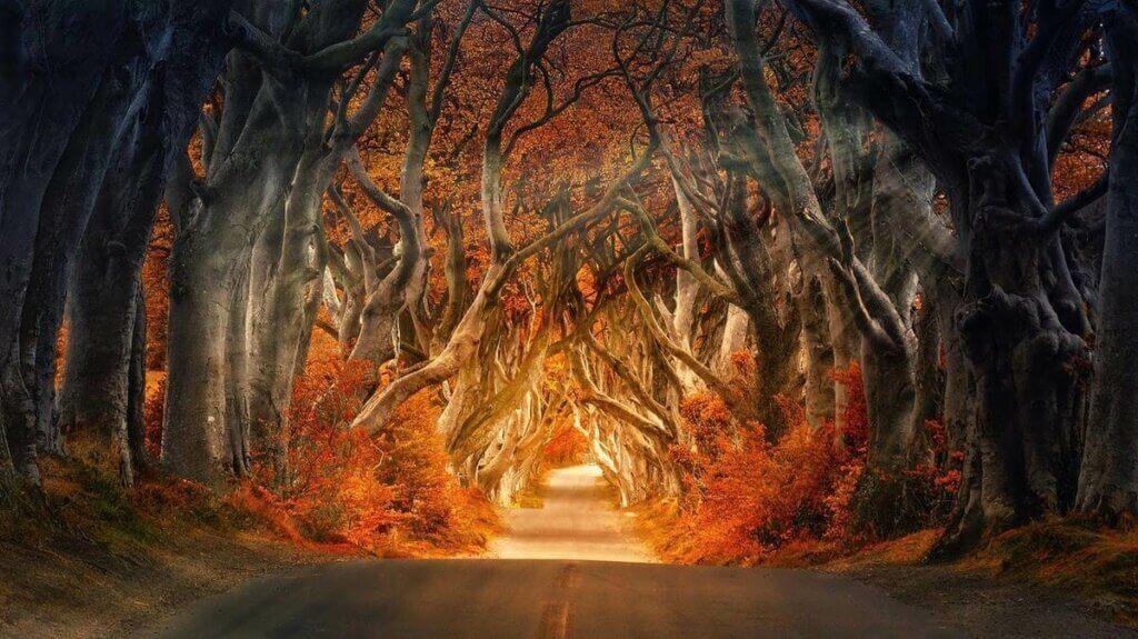 Zagadkowy las