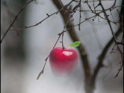 Mały owoc na drzewie - opowieść o pokorze