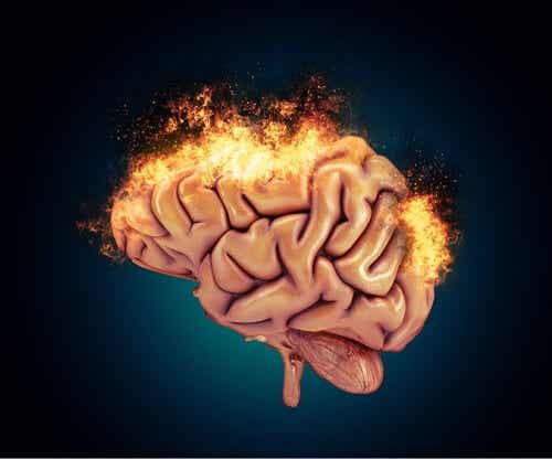 Neurobiologiczne podstawy agresywności