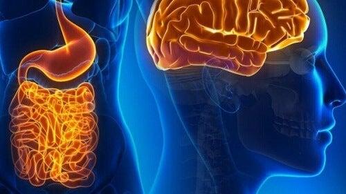Neurony jelitowe i ich fascynujące życie