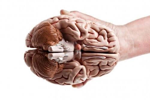 Mózg trzymany w dłoni