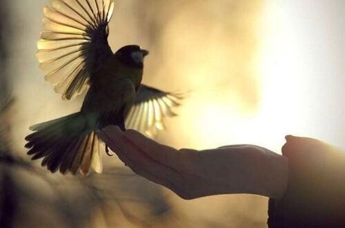 Konrad Lorenz: ptak na dłoni