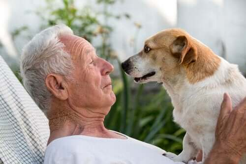 Uśmiechnięty, starszy mężczyzna i pies twarzą w twarz