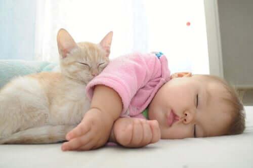 Dziecko z kotem