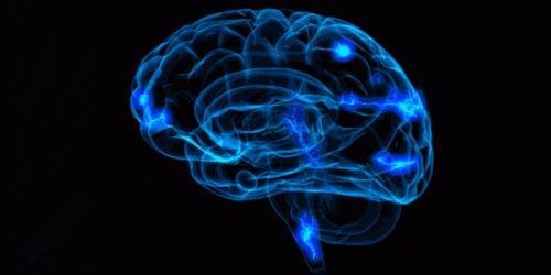 Model mózgu - nauronauka edukacyjna