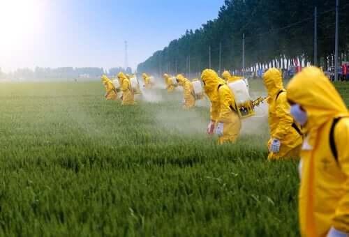 Wpływ pestycydów na mózg - poznaj go!