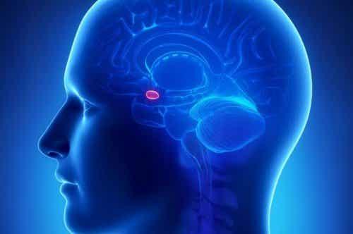 Ciało migdałowate w mózgu