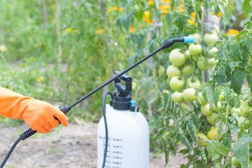 Spryskiwanie upraw