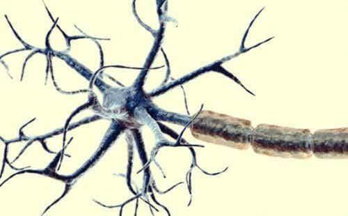 Synapsy i nocyceptory