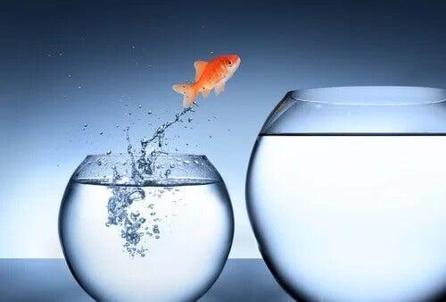 Rybka wyskakująca z akwarium
