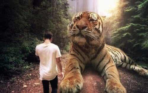 Mężczyzna przed tygrysem