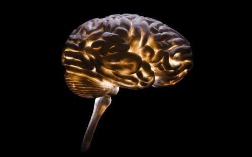 Neurokryminologia: jak zrozumieć przestępczość