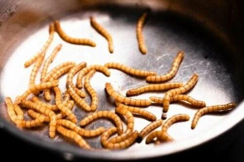 Wermifobia, czyli strach przed robakami