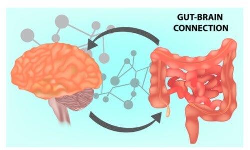 Mikrobiota jelitowa - definicja, znaczenie i zastosowania medyczne
