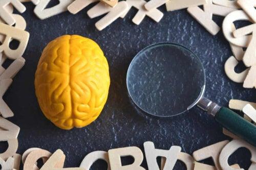 Mózg pod lupą