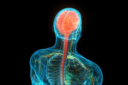 Ośrodkowy układ nerwowy
