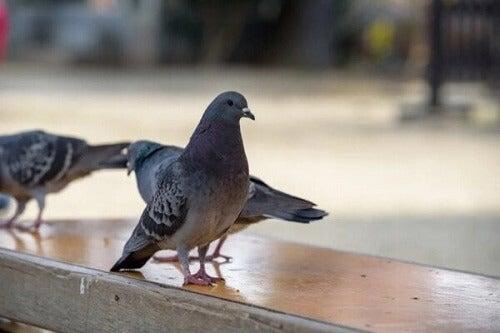 Na czym polega ornitofobia czyli lęk przed ptakami