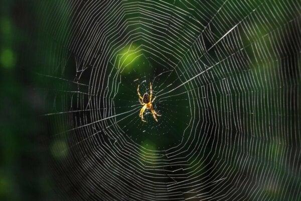 Co to znaczy, gdy śnisz o pająkach?