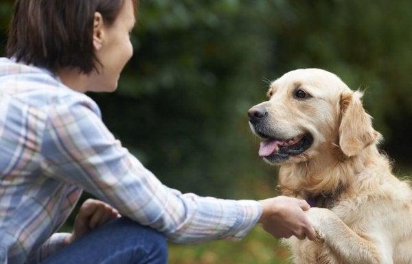 Psy rozpoznają twarze swoich właścicieli - w jaki sposób to robią?